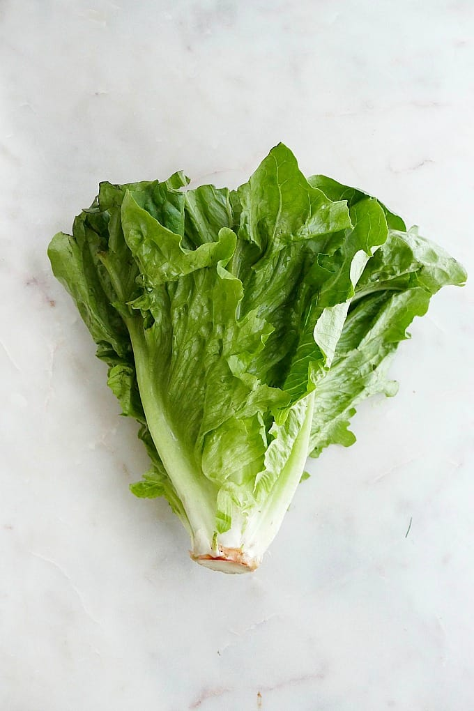 head of romaine lettuce on a white counter