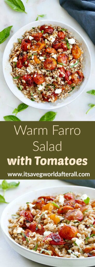 images of warm farro salad with roasted tomatoes separated by a text box