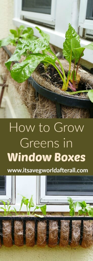 images of window box greens separated by a text box with post title