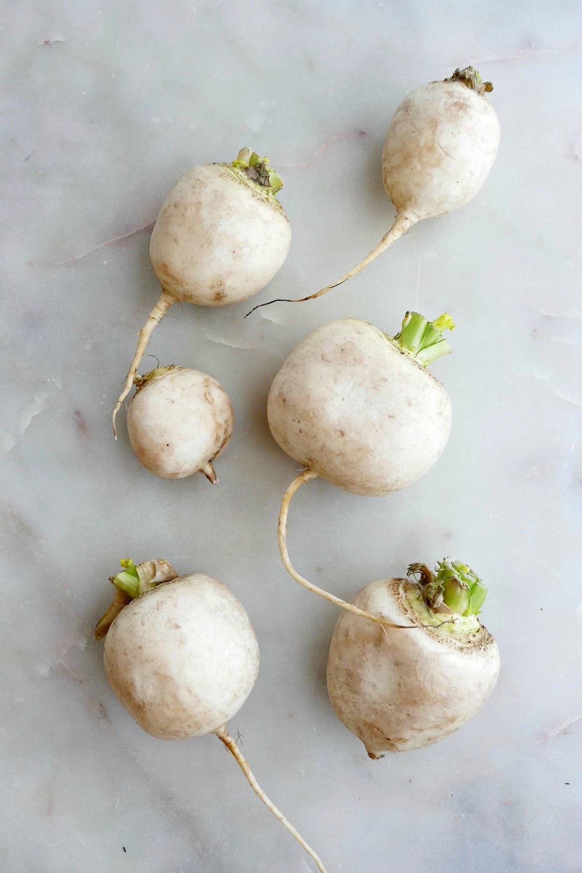 six white Japanese turnips spread out next to each other on a counter