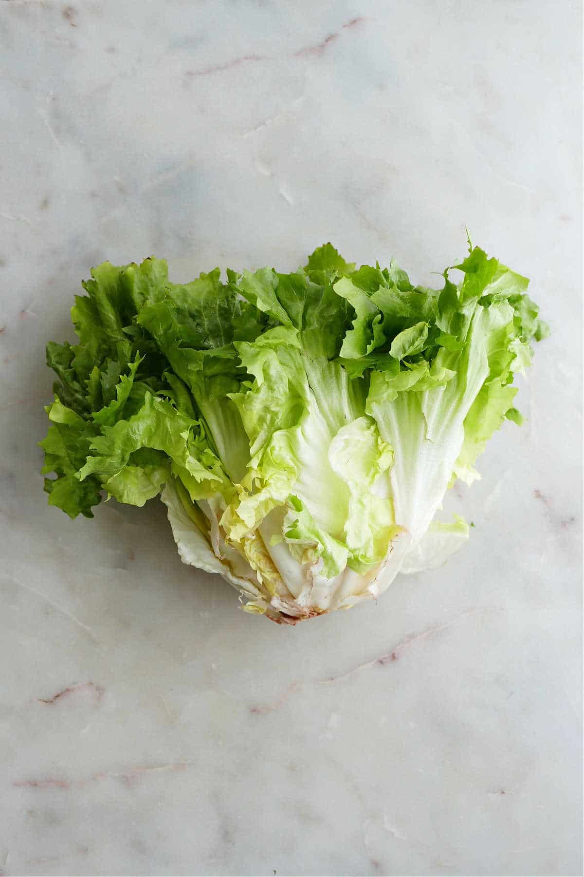 head of escarole with green leaves on a white counter